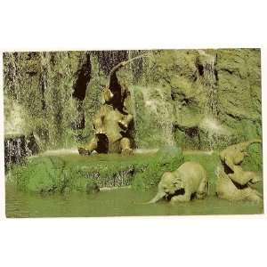 Walt Disney World Magic Kingdom Jungle Cruise 3x5 Postcard