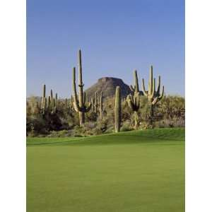 com Saguaro Cacti in a Golf Course, Troon North Golf Club, Scottsdale