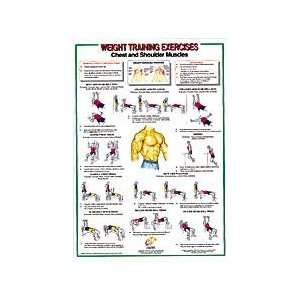 Chest / Shoulder Muscles Chart:  Sports & Outdoors