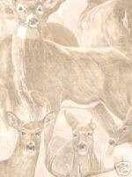 WhiteTail Deer Wallpaper Buck Doe Whitetail HG554