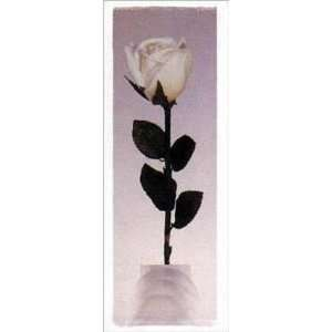 Long Stem Rose Poster Print