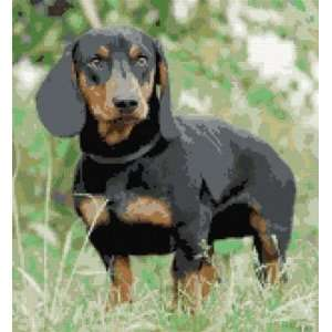 Dachshund Dog Counted Cross Stitch Kit: Everything Else