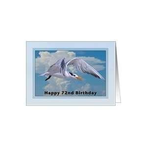 Happy Birthday, 72nd, Royal Tern Bird Card Toys & Games